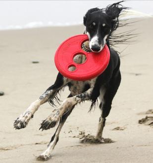 Dog & Puppy Toys